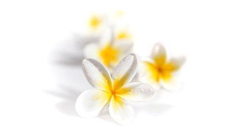 Monoi Blumen