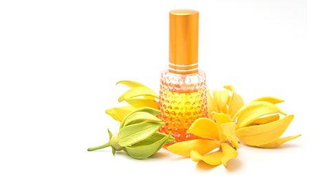 Ylang Ylang Öl mit Blüten