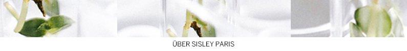 Grüne Pflanze auf weißem Hintergrund - Über Sisley